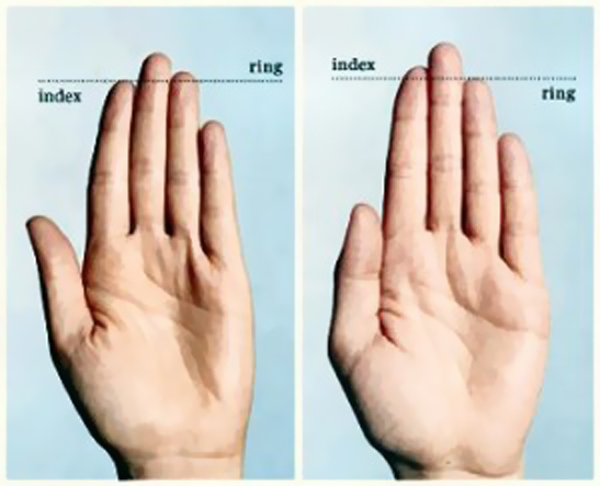 [New Study] Finger Length, Your Penis & Your Testosterone Level