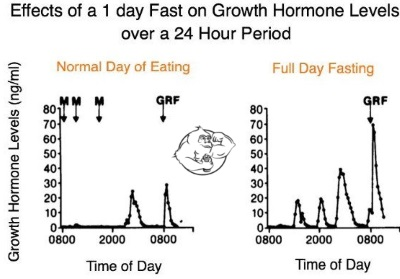 effects of fasting on growth hormone