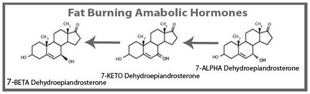 RS Transaderm Testosterone Gel Fat Burning Metabolites